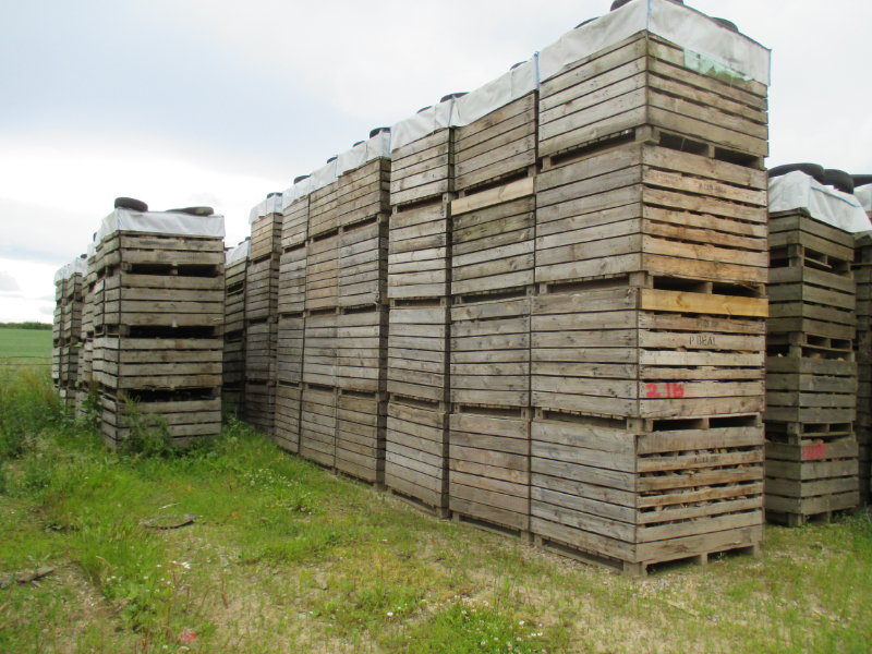 Lindrick Logs drying naturally