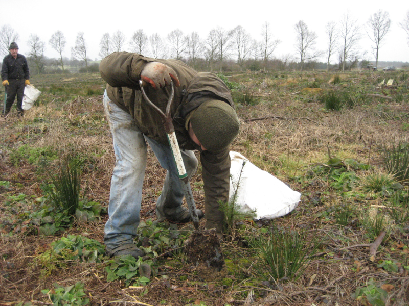Lindrick Logs replanting trees