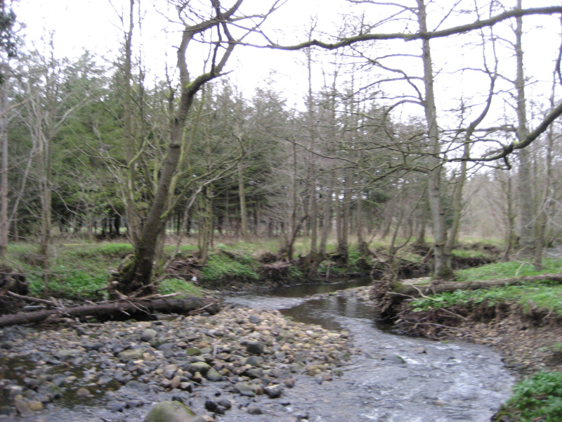Lindrick Logs River Laver running through woods