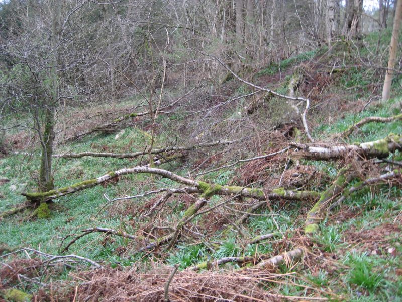 Lindrick Logs wood left rot for wildlife